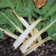Swiss Chard Fordhook Giant - Appx 120 seeds  Beat Leaf
