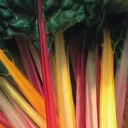 Swiss Chard 'Rainbow - 150 seeds - Beat Leaf