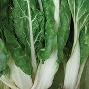 Swiss Chard Virgo