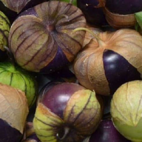 Tomatillo Purple - 100 seeds Physalis ixocarpa