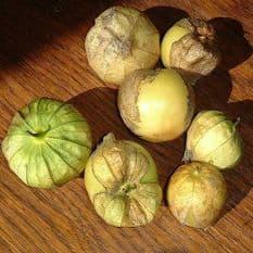 Tomatillo Verde - 200 seeds Physalis ixocarpa