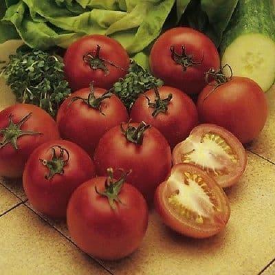 Tomato Alicante Appx 80 seeds