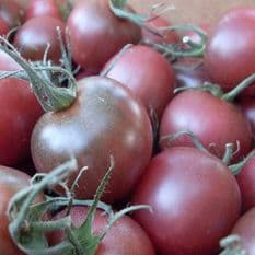 Tomato - Chocolate - Cherry type - 10 seeds