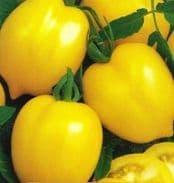 Tomato - Citrina - 25 seeds - Vegetable