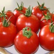 Tomato F1 Orkado - Indeterminate type - 15 seeds