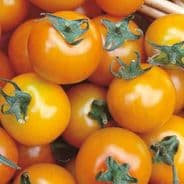 Tomato F1 Sungold - 10 seeds -
