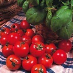 Tomato 'Gardeners Delight' 50 seeds