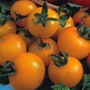 Tomato 'Golden Sunrise' 100 seeds