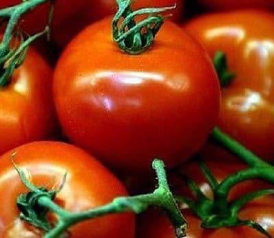 Tomato Harbinger - 120 seeds
