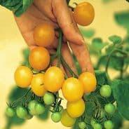 Tomato Ildi - 20 seeds