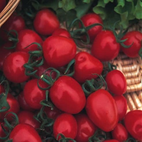 Tomato Red Alert - 40 seeds