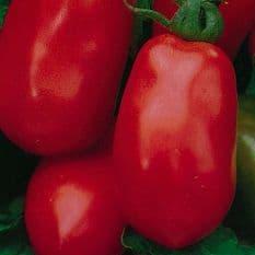 Tomato Roma VF 200 seeds