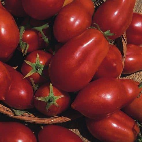 Tomato San Marzano Italian Plum - Appx 50 seeds