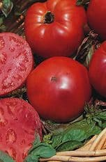 Tomato Super Marmande 25 seeds