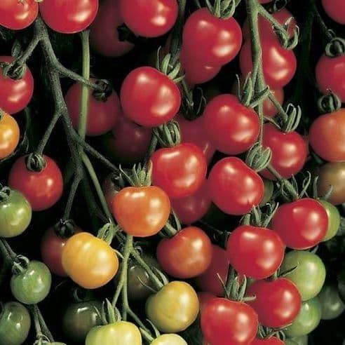 Tomato Supersweet 100 F1 - 20 seeds