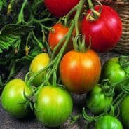 Tomato Tigerella 200 seeds