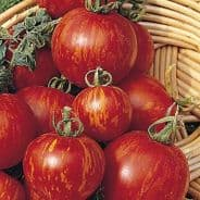 Tomato Tigerella 30 seeds Free P&P