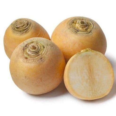 Turnip Golden Ball - Appx 500 Seeds