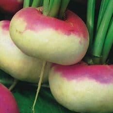 Turnip Purple top milan - 50 grams - Bulk Discount available