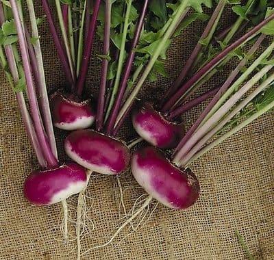 Turnip 'Purple top Milan' - Min 300 seeds *Free P&P*