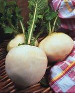 Turnip 'Snowball' Min 1000 seeds - Vegetable