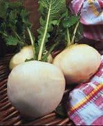Turnip 'Snowball' Min 200 seeds Free P&P