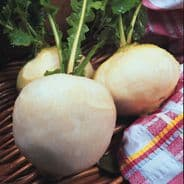 Turnip Snowball Seeds - 200 seeds / 3500 seeds