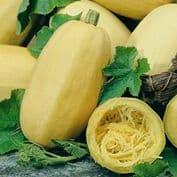 Winter Squash Spaghetti -  45 Seeds