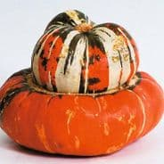 Winter Squash Turks Turban - 25 Seeds