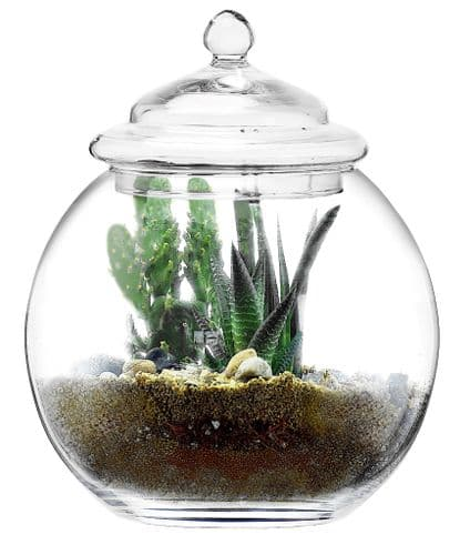 Glass Planter Bowl & Lid 26cm, great for home projects, Solavia Glassware