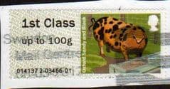 2012 1ST 'PIGS -OXFORD SANDY' FINE USED